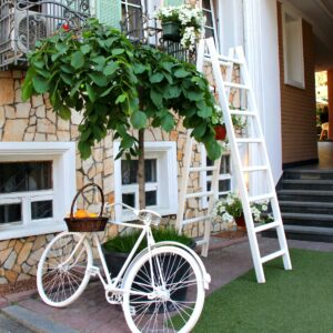 Bicycle and ladder in a garden